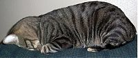 TopRq.com search results: sleeping cat
