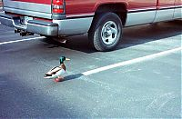 TopRq.com search results: ducks on park spaces