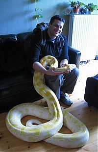 TopRq.com search results: julius, python snake family pet