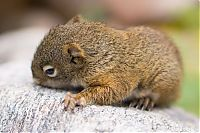 TopRq.com search results: baby squirrel