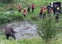 TopRq.com search results: Horse saved from a deadly muddy pond, Radcliffe, Greater Manchester, United Kingdom