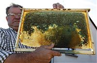 TopRq.com search results: Bees make a different honey, France