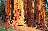 TopRq.com search results: Sequoia trees, Redwood National and State Parks, California, United States
