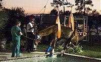 TopRq.com search results: Horse rescued from swimming pool, Florida, United States
