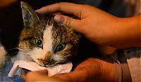 TopRq.com search results: Illegally transported cats rescued after an acident, China