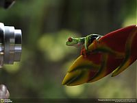 Fauna & Flora: Animal and wildlife photography by National Geographic