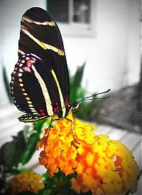 Fauna & Flora: breeding butterflies at home