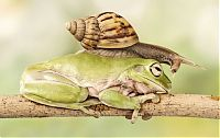 TopRq.com search results: snail over the sleeping frog