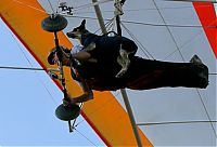 Fauna & Flora: Shadow, the paragliding dog