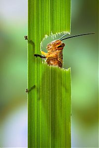 TopRq.com search results: grasshopper eating a plant