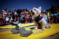 TopRq.com search results: Surf Dog Championship 2013, Coronado Bay Resort, California, United States