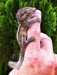 TopRq.com search results: Abandoned baby squirrel rescued by Paul Williams