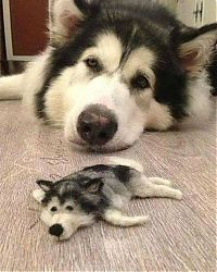 TopRq.com search results: husky dog with a husky doll