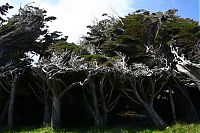 TopRq.com search results: Windswept Trees, Slope Point, South Island, New Zealand