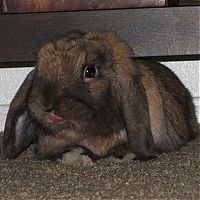 TopRq.com search results: cute bunny rabbit