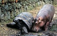 Fauna & Flora: orphan hippo with a 130 years old tortoise