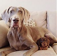 Fauna & Flora: two dogs friends