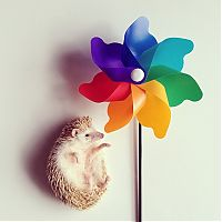 TopRq.com search results: darcy the cute hedgehog