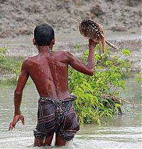 TopRq.com search results: Boy saves a baby fawn, Bangladesh