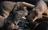 TopRq.com search results: fishing with otters