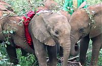 TopRq.com search results: baby elephant cried for hours after mother passed away