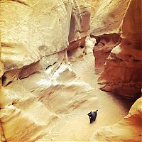 Fauna & Flora: cat climbs mountains and desert treks