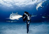 Fauna & Flora: shark underwater photography