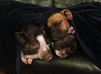 Fauna & Flora: pig and dogs