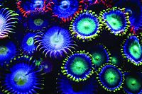 TopRq.com search results: Coral reefs in UV light