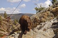TopRq.com search results: rescuing a bear from a bridge ledge