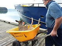 TopRq.com search results: whale watchers found deers in the sea