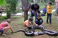 TopRq.com search results: giant anaconda snake