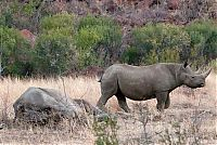 TopRq.com search results: black rhinoceros against a furious elephant
