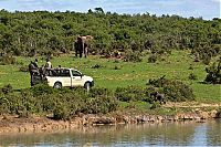 TopRq.com search results: Rescuing a baby elephant, Addo Elephant National Park, Port Elizabeth, South Africa