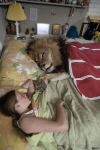 Fauna & Flora: lion pet