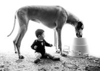 Fauna & Flora: dog and the child