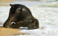 baby elephant on the beach at the sea