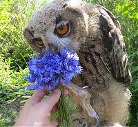 owl with a blue flower