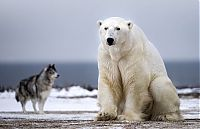 dog against a polar bear