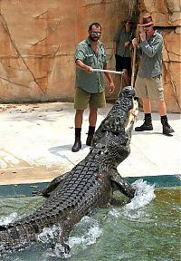 TopRq.com search results: Cage of Death, Crocosaurus Cove Park, Darwin City, Australia