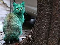 Green stray cat, Varna, Bulgaria