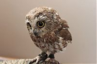 TopRq.com search results: owl birds