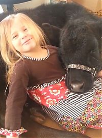 TopRq.com search results: little girl with a baby cow