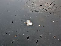 TopRq.com search results: saving duck from a frozen lake