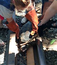 TopRq.com search results: rescuing turtle from railroad tracks
