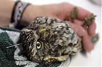 TopRq.com search results: owl with an acupuncture