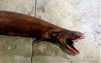 TopRq.com search results: Xenacanthus prehistoric shark, Lakes Entrance, Victoria, Australia
