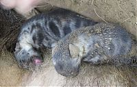 TopRq.com search results: rescuing hyena cubs