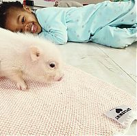 TopRq.com search results: domestic pig pet with a little kid