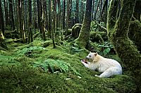 TopRq.com search results: Wildlife photography by Paul Nicklen